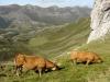foto-2-vacas-y-fondo-de-valle-vicente